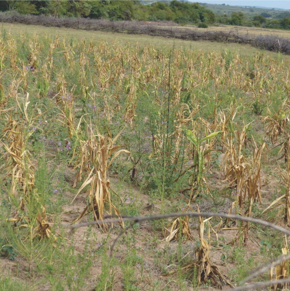 Angola Drought Relief